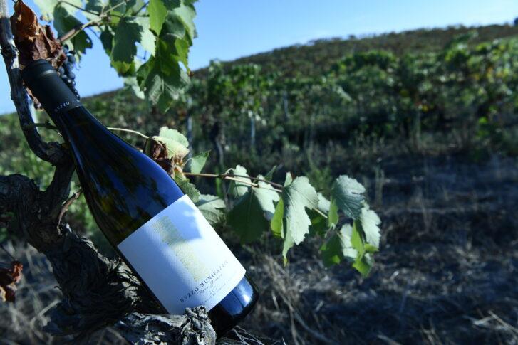 Vin blanc Roca gianca