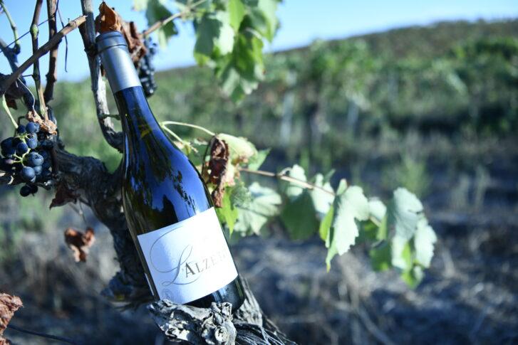Vin blanc Alzeto prestige