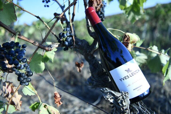 Vin corse E croce rouge
